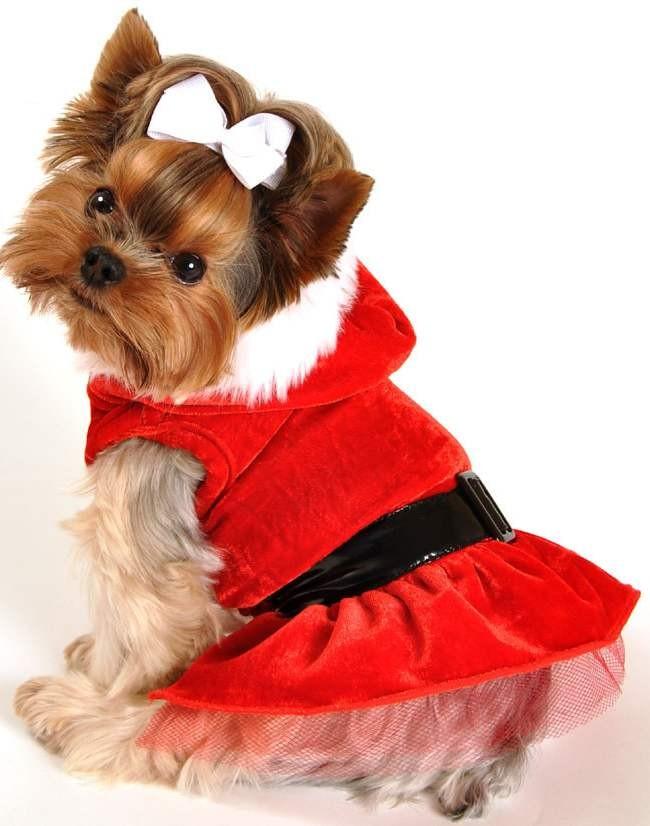Картинки по запросу одежда для собак